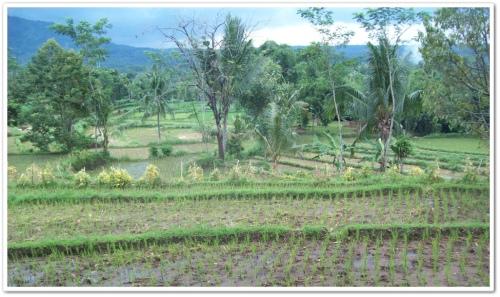 kawasan sekitar situs sangat mendukung untuk dipadukan dengan kegiatan wisata alam