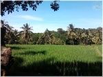 Naturally Jember 19