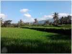 Naturally Jember 8